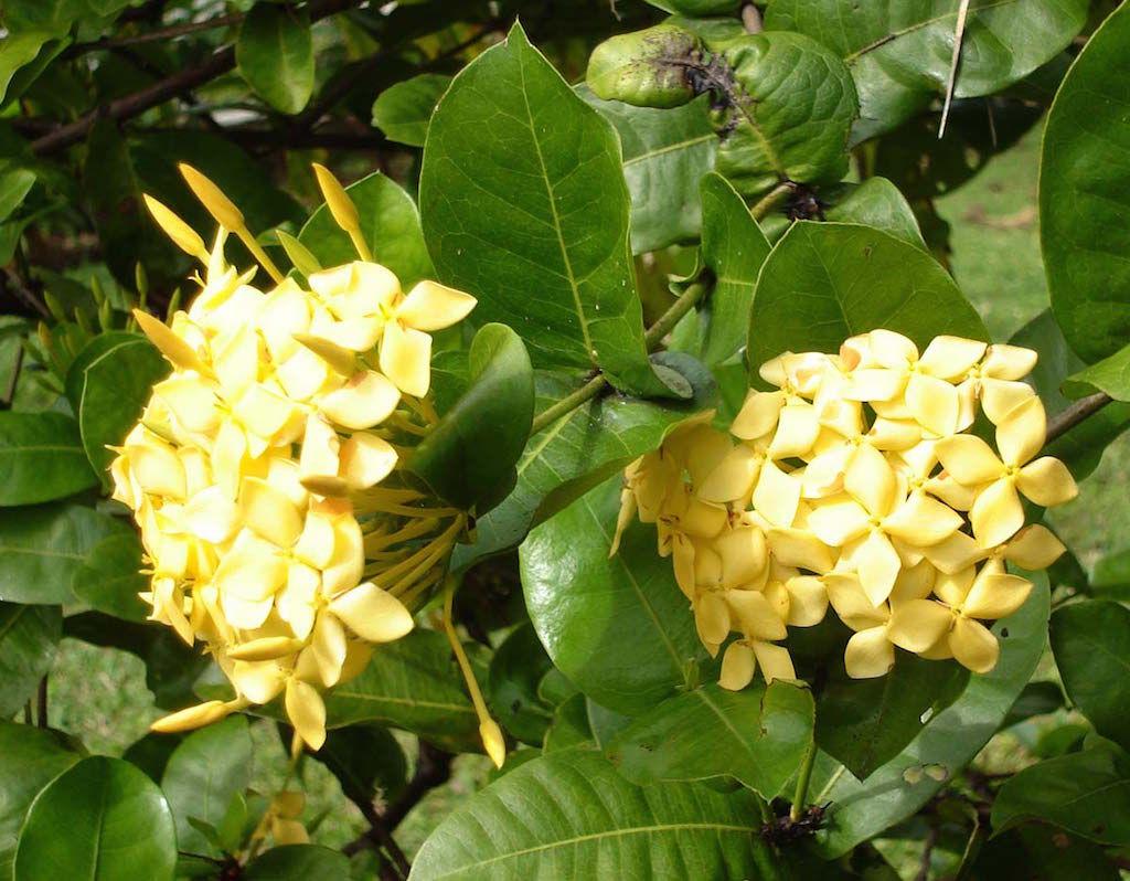 Jungle Geranium Flower Song